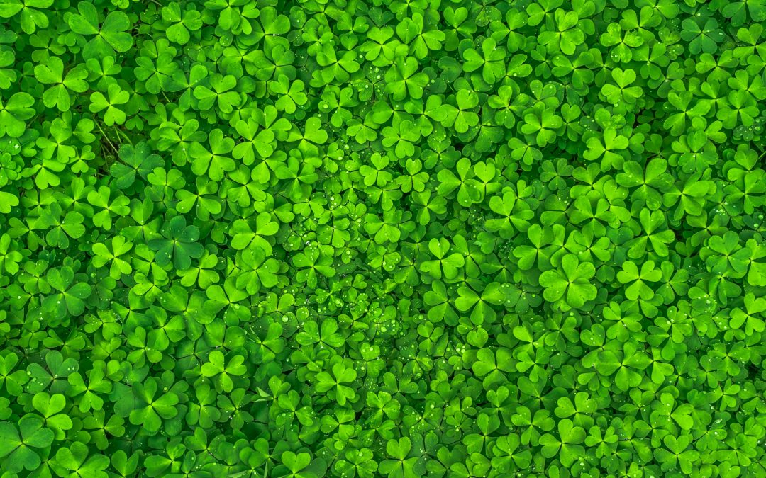 St. Patrick's Day Meal Recipes to Keep You Lean and Green